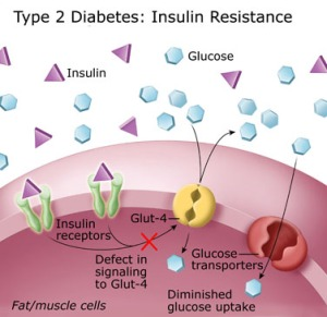 Metformin And Insulin Resistance