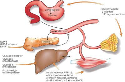 Diabetes Tipe 2 - Pencernaan dan Diabetes